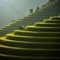 Mù Cang Chải lọt top 50 điểm đến đẹp nhất thế giới